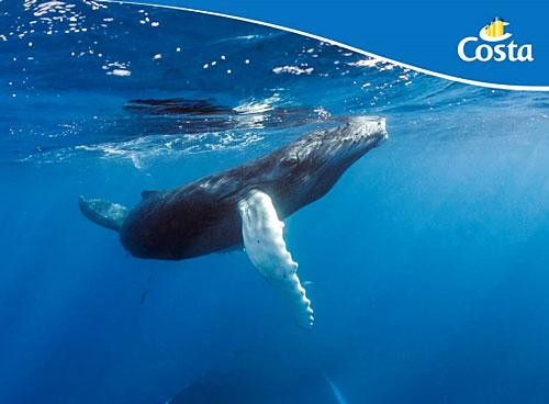 Costa s'engage dans les sciences marines et la protection des cachalots |