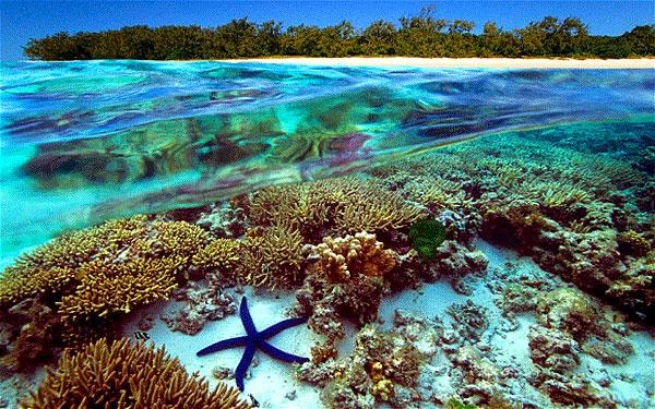 Barrière de Corails du Belize