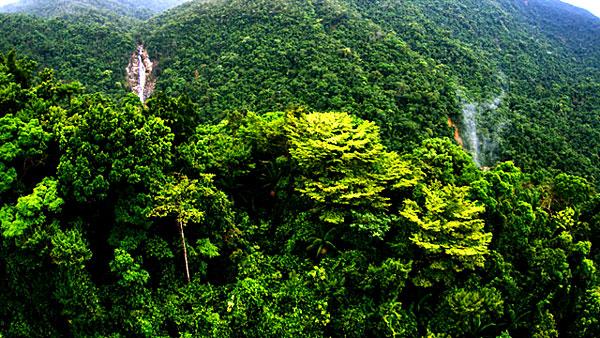 Forêt Belize