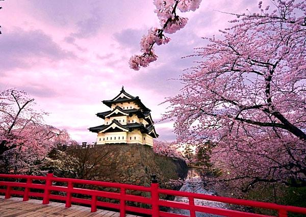 Cerisiers du Palais Impérial