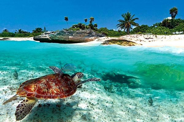 Croisières MSC Caraïbes Antilles