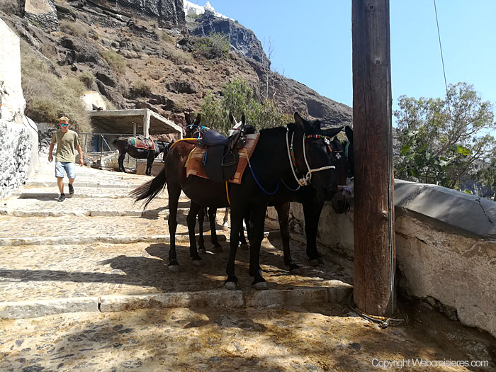 Les mules à disposition pour effectuer la montée...