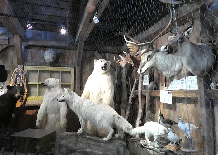 Vue partielle du musée animalier