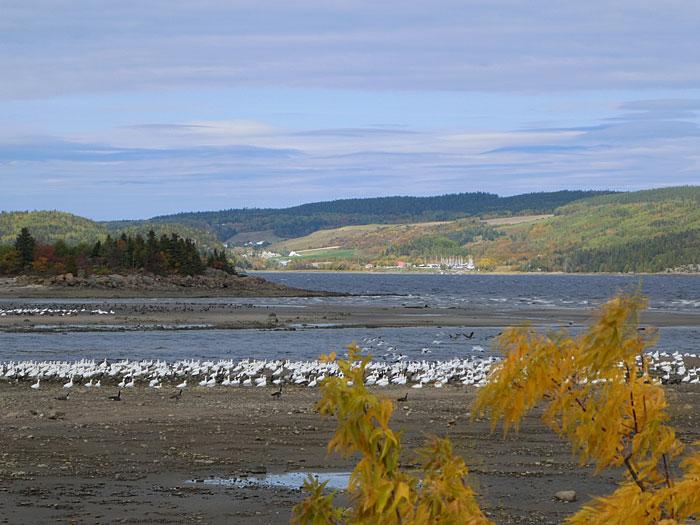 Vue partielle du fjord et de ses nombreux oiseaux