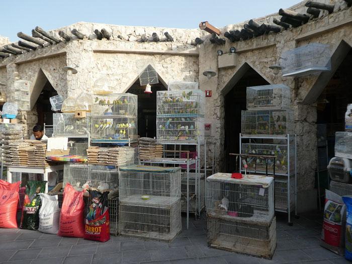 Vente d'oiseaux au souk Waqif